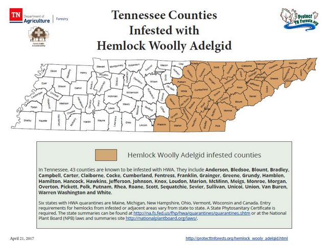 A map of hemlock woolly adelgid infestated counties in Tennessee.