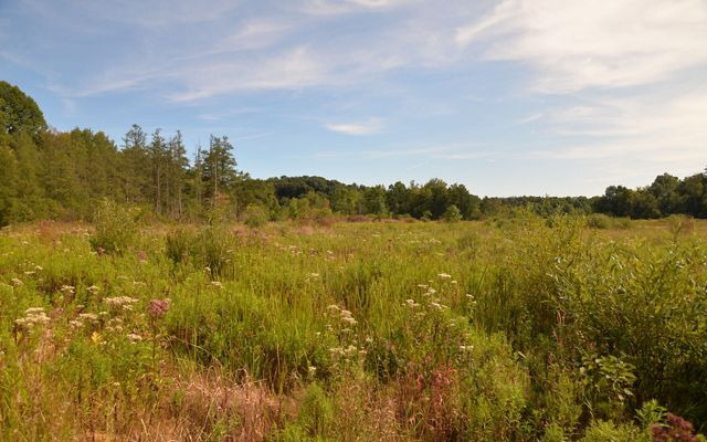 Overlooking the fen filled with grasses and pink, white and purple blooming wildflowers; tall evergreen trees line the edges