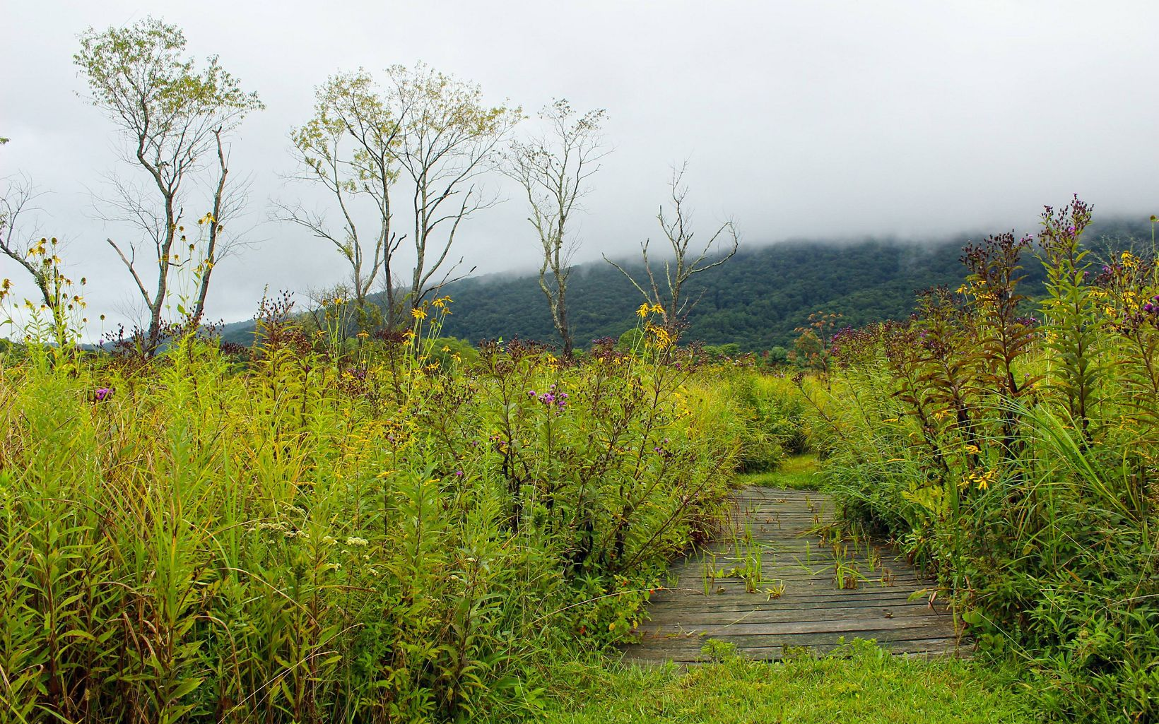 A wooden boardwalk leads a path between tall blooming plants. Heavy white clouds hang low over the mountain ridge in the background.