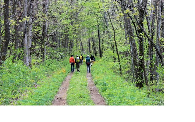Seven people walk together in small groups along a two-track dirt road the curves through a forest.