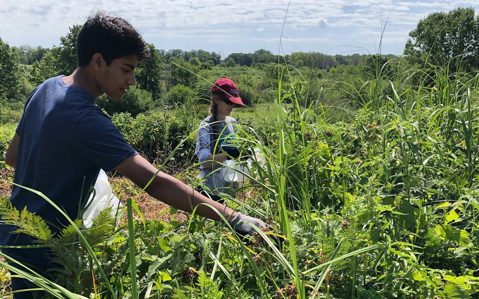 High school interns Luke and Erna collect seed from native wildflowers to be used in plantings as part of the restoration of the land at Chiwaukee Prairie West.