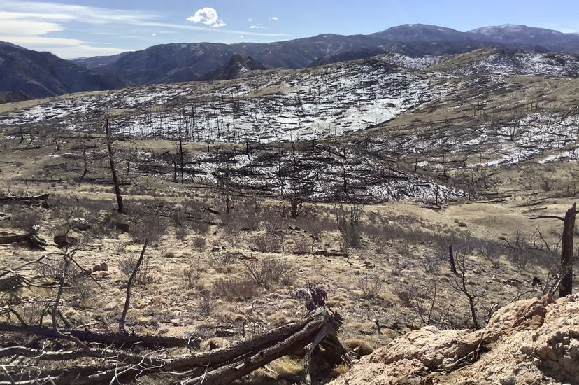 High Park burn scar in January 2020, eight years after the fire. There is very little tree regeneration. TNC is looking to reforest this region with seeds and seedlings.