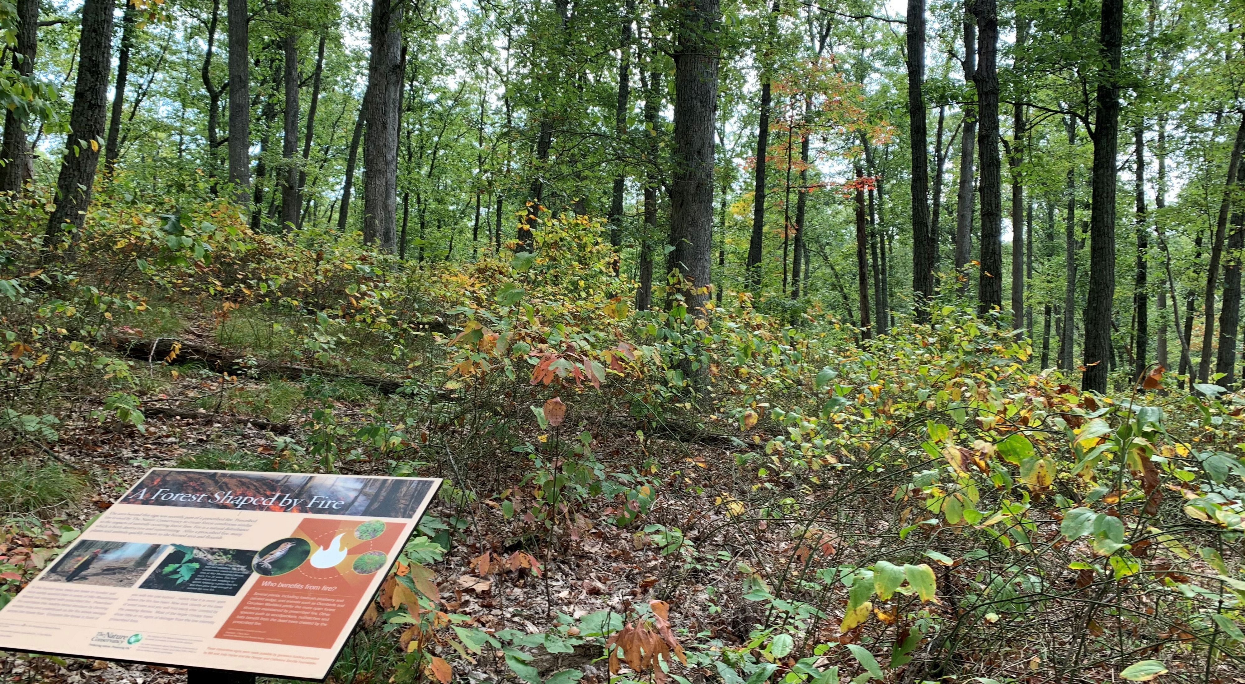 Interpretive sign in forest in early autumn.