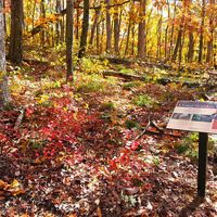 Preserve sign in colorful forest in autumn.