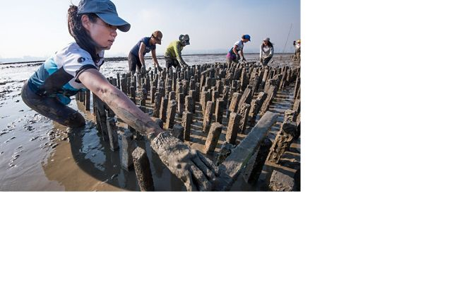 Staff and partners build an artificial oyster reef in Hong Kong.