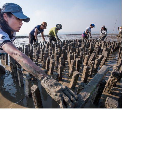 Building an oyster reef off of Hong Kong