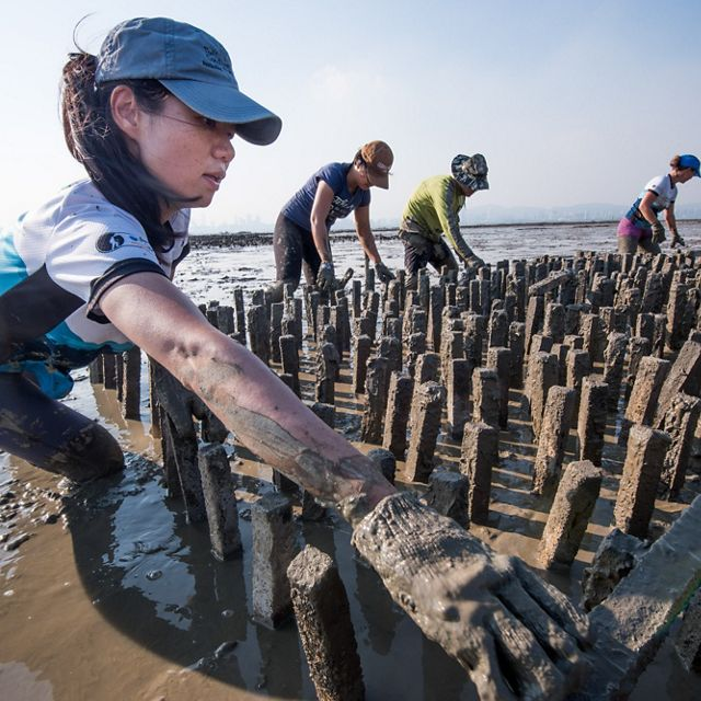 Building an oyster reef off of Hong Kong