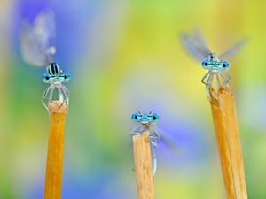 Three bugs sitting atop a flower