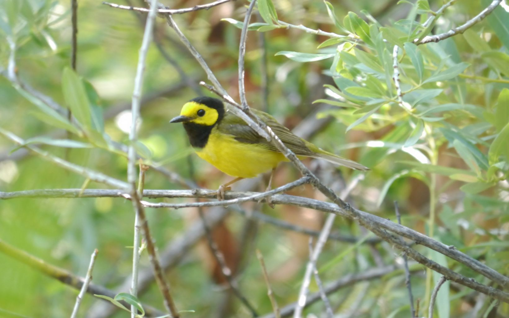 Santa Fe Canyon Preserve is a great place for birding!