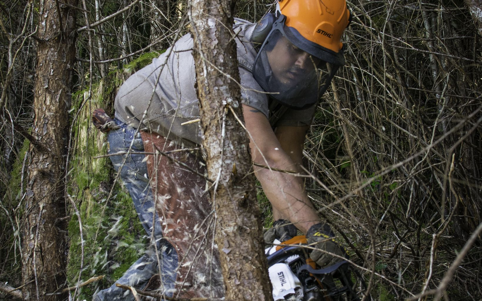 Second-growth forest restoration