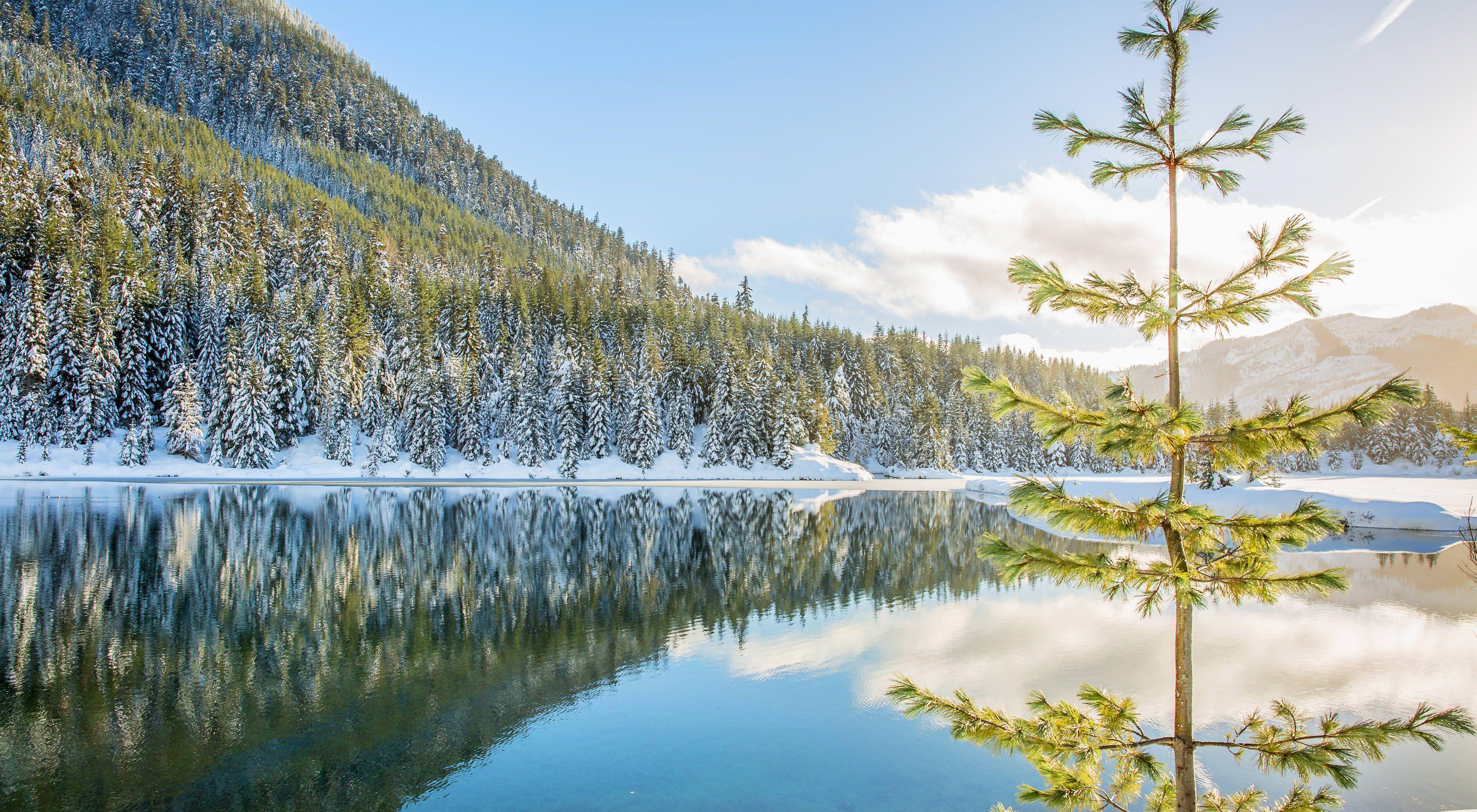 Bosque Siempreverde reflejado en estanque.