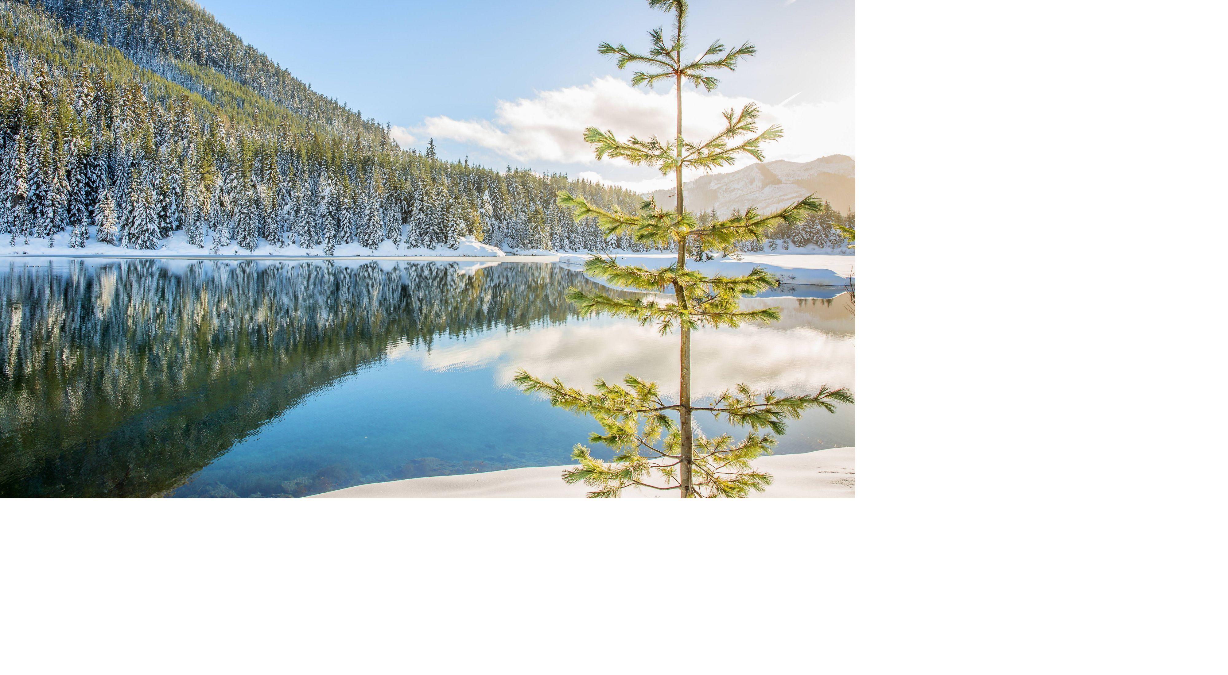 Bosque Siempreverde reflejado en estanque