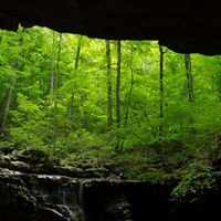A view of a forest from inside of a cave.
