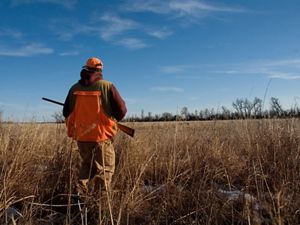A man with a gun sets out to hunt on grasslands.
