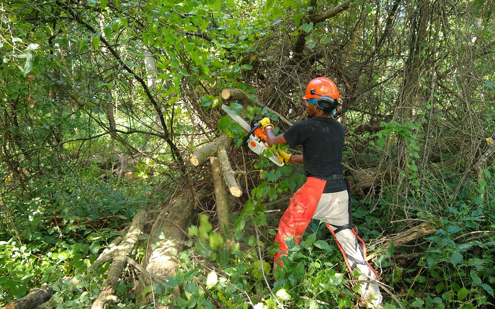 TNC staffer cuts invasive brush