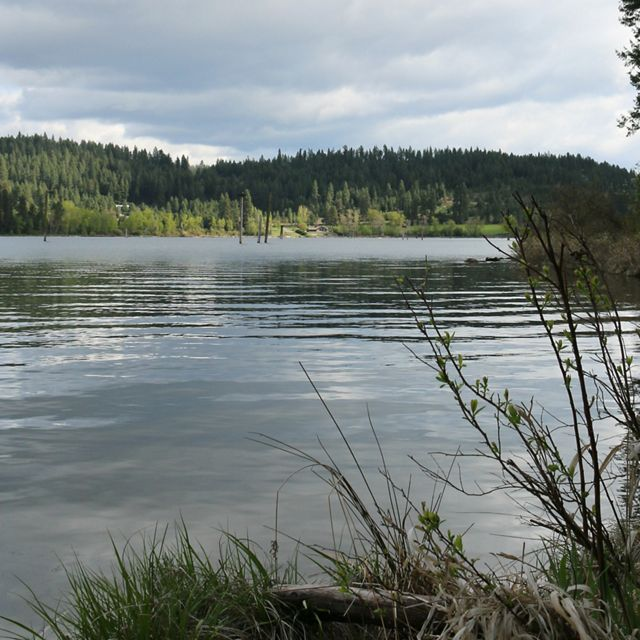 Lake view with forest in the distance