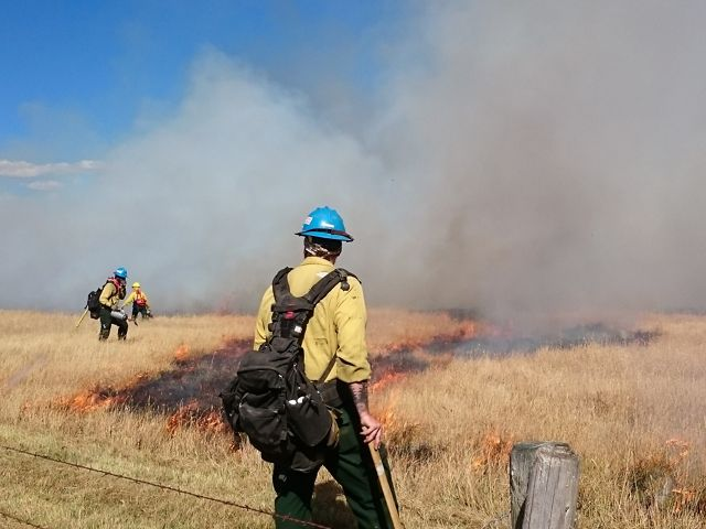 Fire crew members in protective gear arrayed over grasslands with patches of burning grass.
