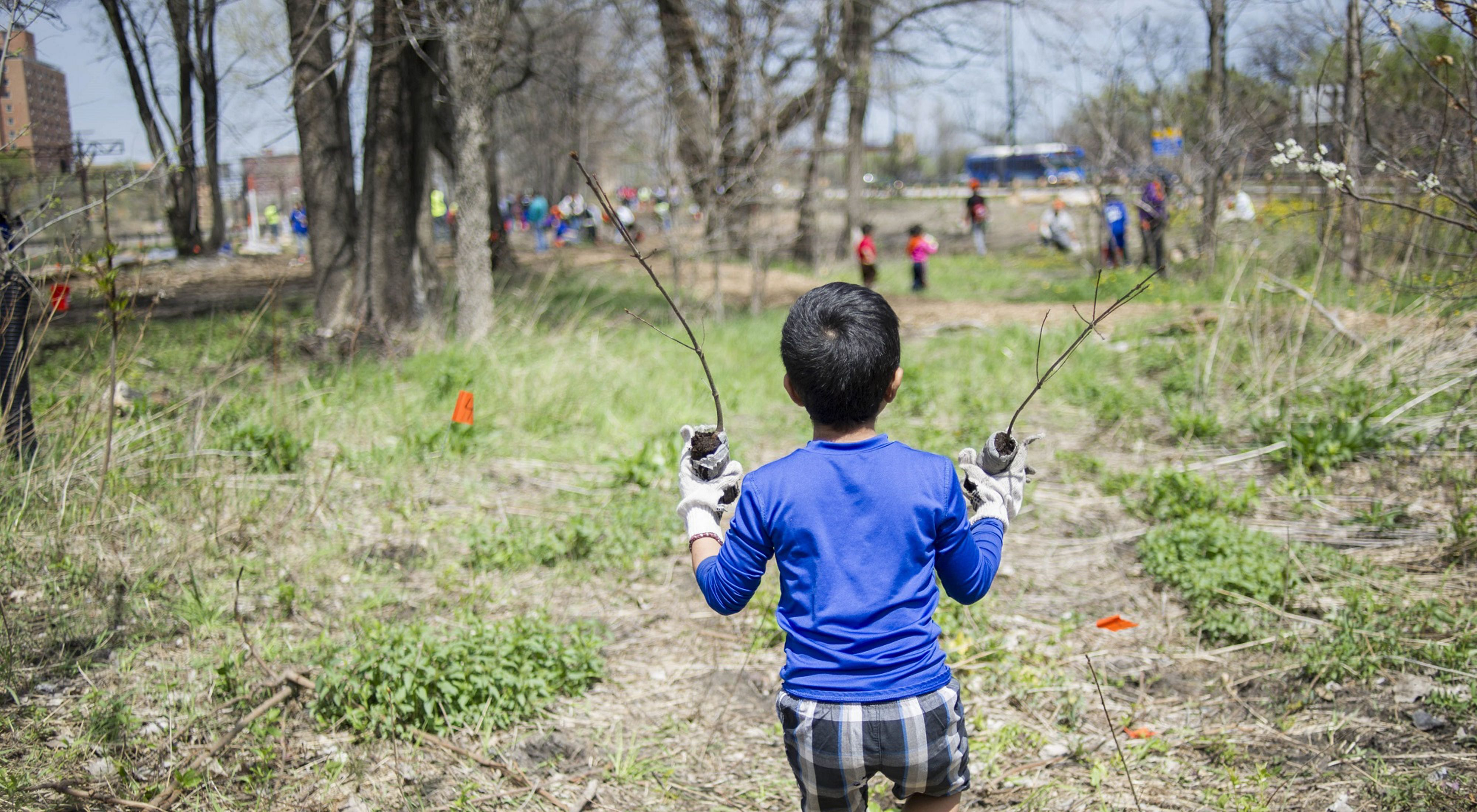 A young volunteer carries two small trees to plant.