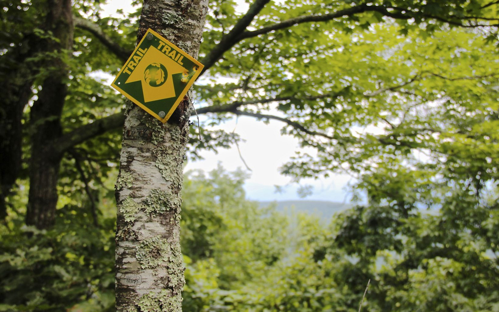 A yellow and green trail blaze is nailed to a moss covered tree trunk. A mountain ridge is visible in the distance through an opening in the leaves.