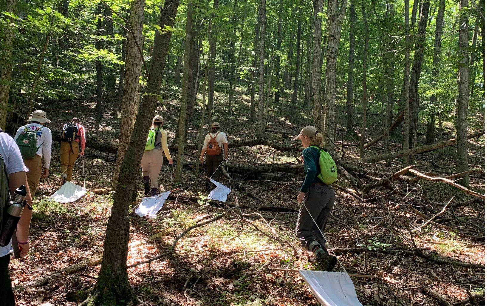 LEAF interns gather samples at Sideling Hill Creek Preserve for a tick study being conducted by Frostburg State biology professor Dr. Rebekah Taylor.