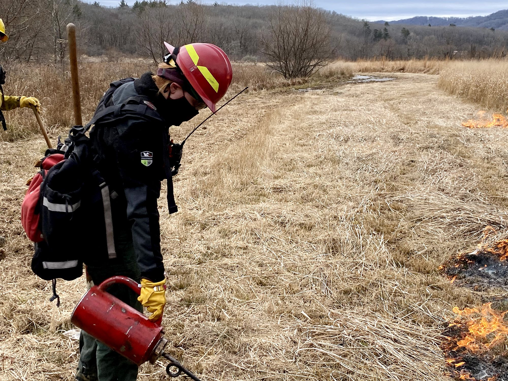 A woman wearing a red hard hat uses a red drip torch to start a fire line in an open grassy field during a controlled burn.