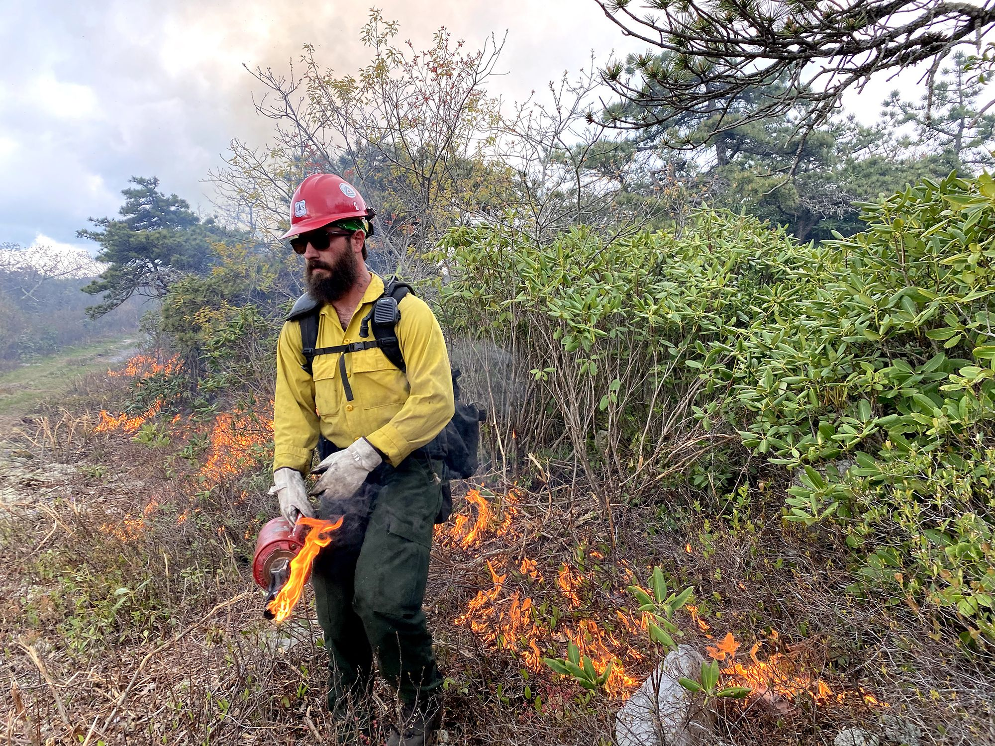 A man with a bushy brown beard holds a red drip torch canister. Behind him a line of fire burns into a stand of tall shrubs during a controlled burn.