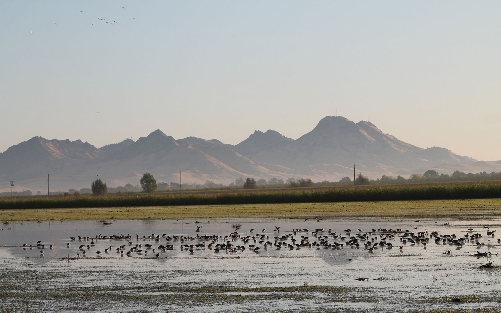 As part of the multi-benefit recharge project in CA's central valley, carefully flooding fields can provide migratory birds food and habitat while helping recharge groundwater