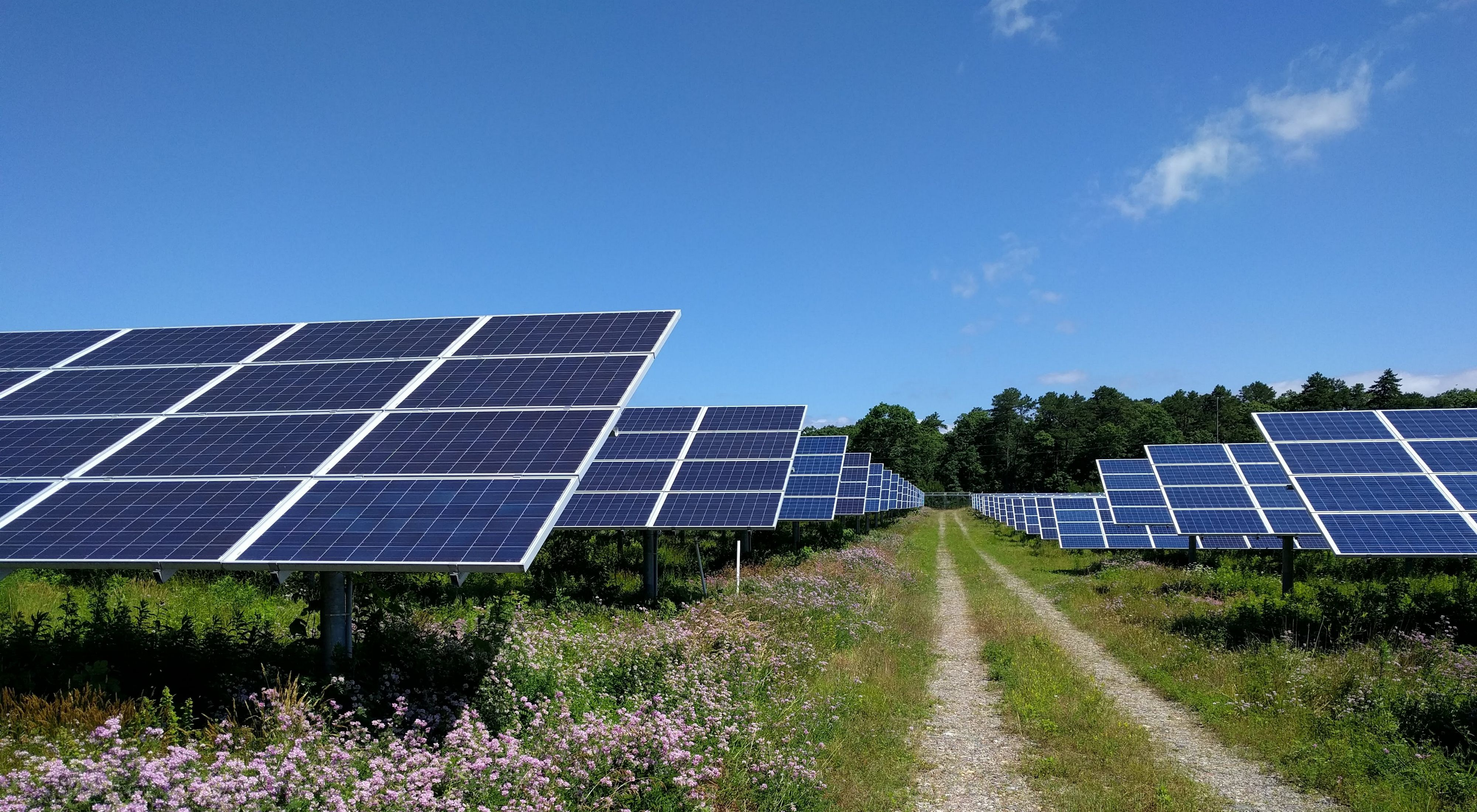 Looking down a dirt path with green grass and rows of solar arrays in view, along with pink flowers in bottom left corner.