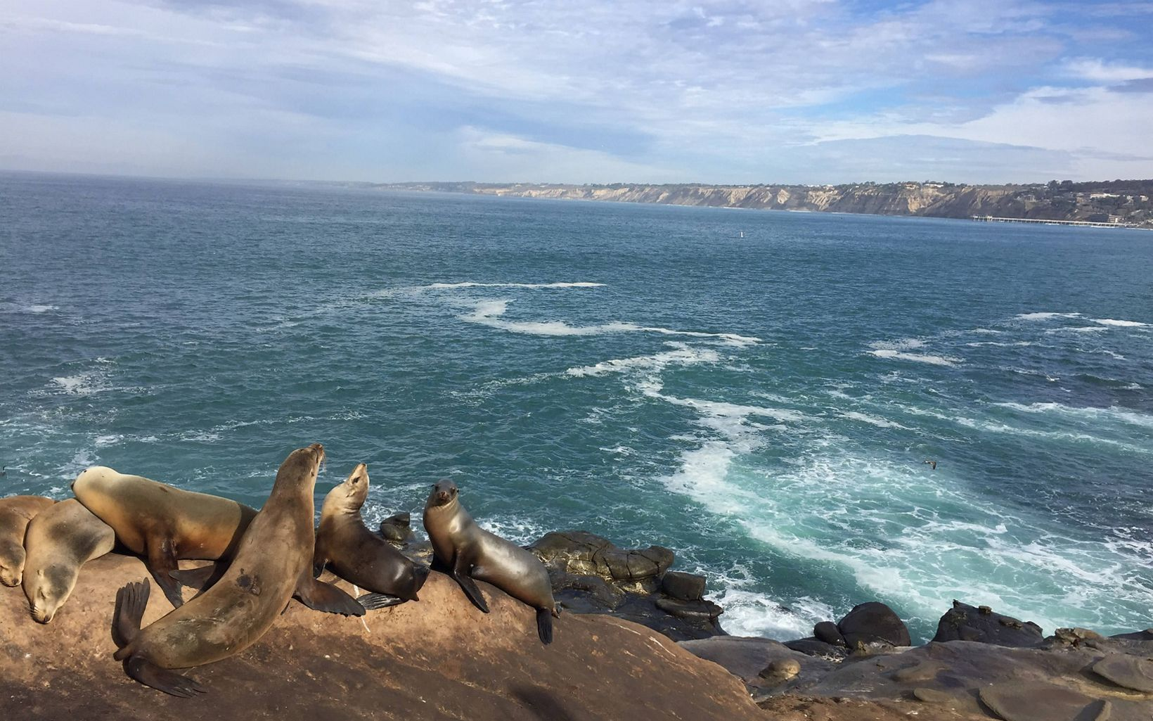 Seals sunbathe on rocks in Southern California