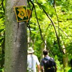 A yellow and green trail blaze is nailed to the trunk of a tree. Three people are walking along the forested trail in the background.