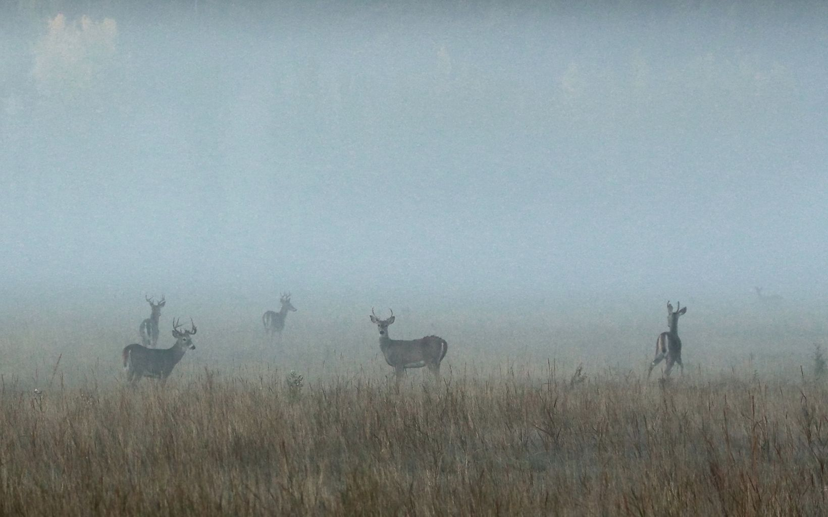 A blanket of fog hides a herd of deer at Ball Creek Preserve