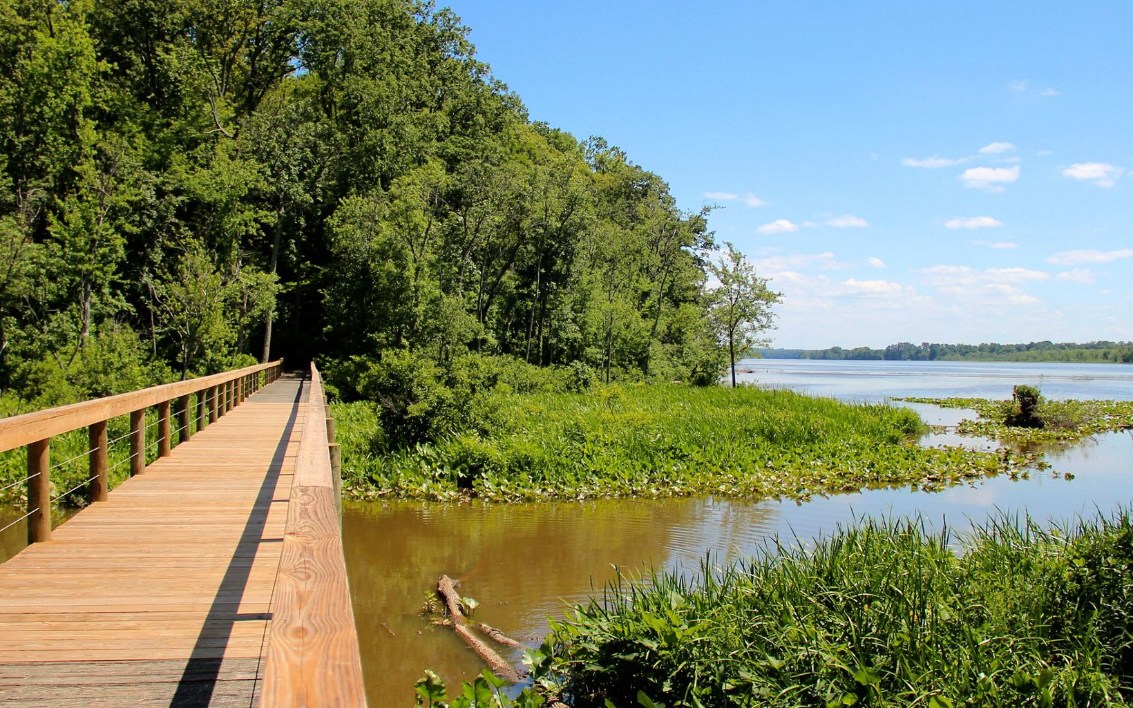 A wooden footbridge extends over open water and wetlands. The main branch of a river is visible in the background with a distant forest along the edges of the river bank.