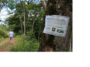 A man walks along a forest trail.