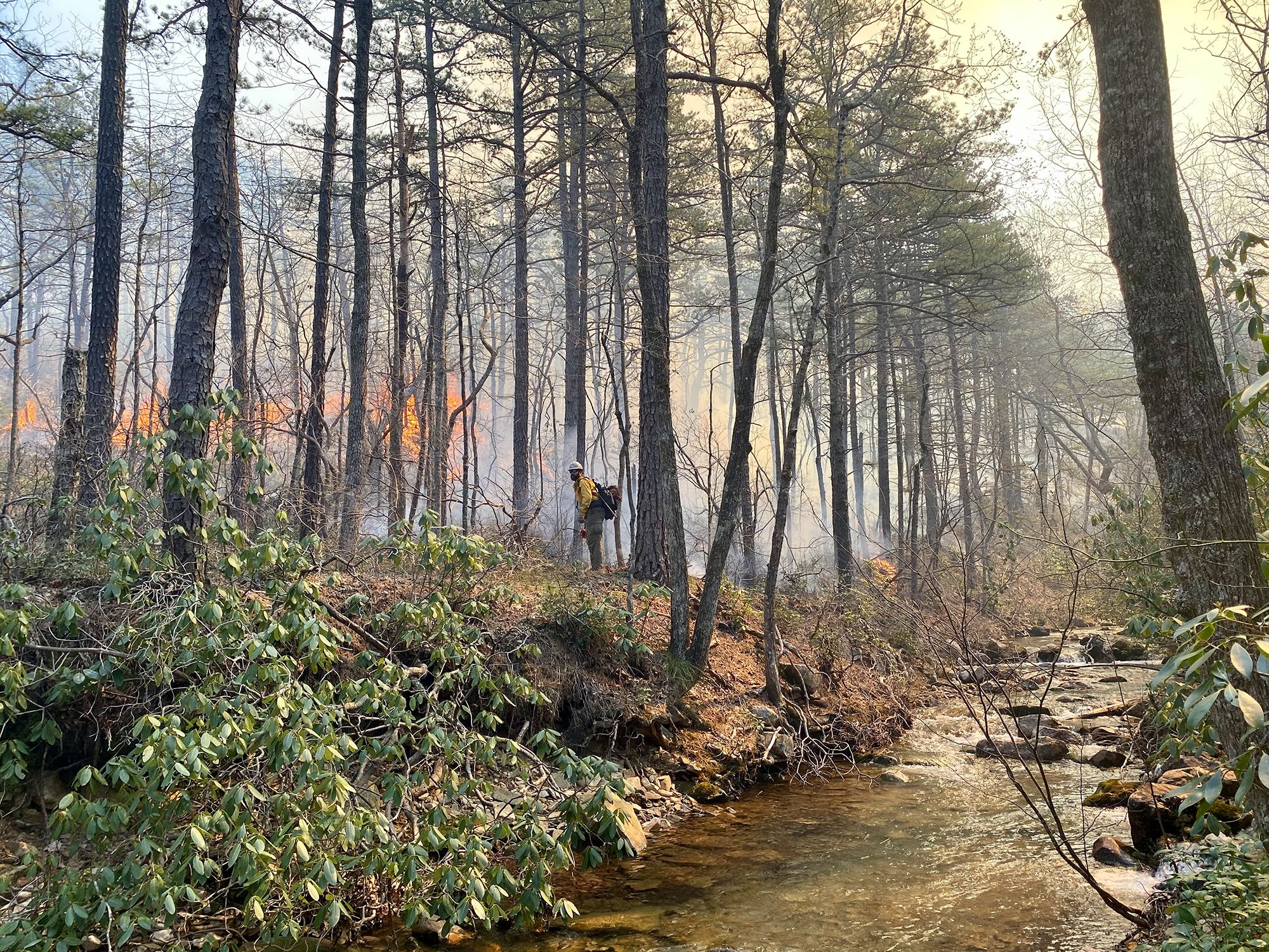A man wearing yellow fire gear stands in a forest. Fire and smoke rise in front of him from a controlled burn. A wide creek flows behind him at the bottom of a steep bank.