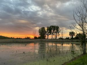 An image of a small pond lightly covered with algae. A sunset in the background with orange reflecting onto the pond. Trees and clouds in the background.