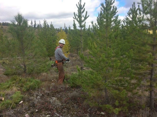 Crews thinning Montana forests to reduce wildfire risks and help forests thrive.