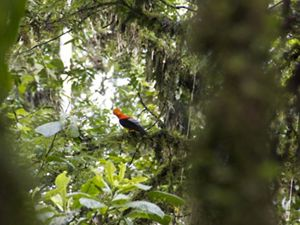 A view of the forest, with a black and orange bird perched on a branch in the background.