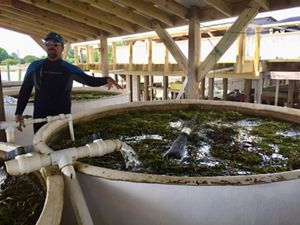 Virginia Coastal Scientist Bo Lusk stands next to a curing tank filled with eelgrass shoots. The shoots will be cured until their seeds are ready for fall planting.