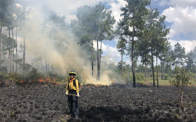 A woman in yellow fire gear poses at the edge of a back burn during a fire workshop. The ground around her is scorched black. A low intensity fire burns in the background.