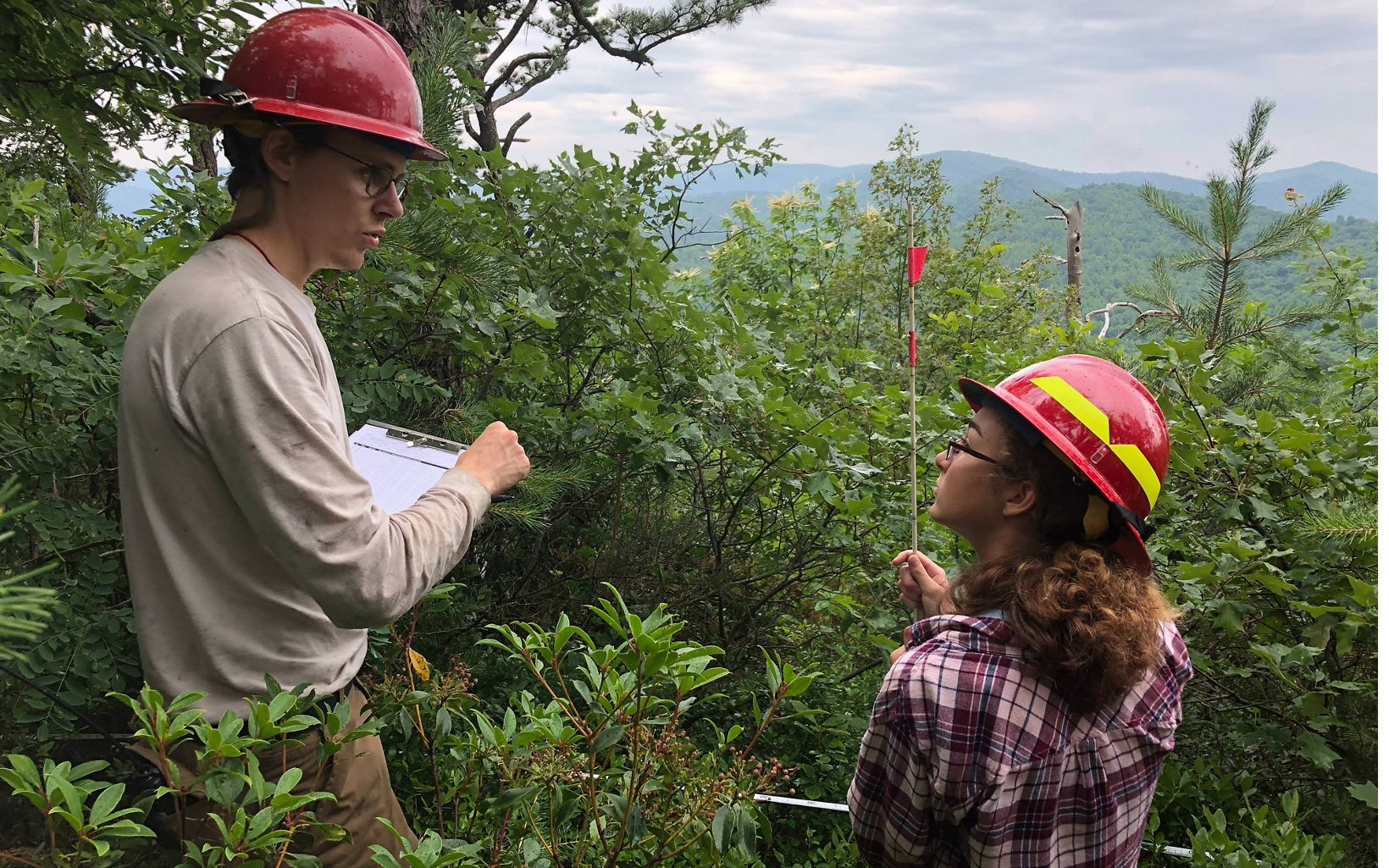 Lane Gibbons (Shenandoah Natl Park, L) and LEAF intern Jasmine Lowitz (R) count stems among a Table Mountain Pine Regeneration site.
