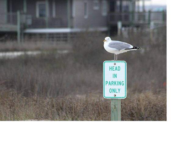 A seagull sits on top of a parking sign