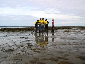 A group of people stand on a mud flat at low tide. Their yellow life vests are reflected in small pools of water. An oyster reef stretches out behind them.