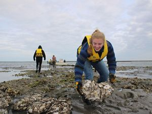 A girl wearing a yellow vest places a black mesh bag of oyster shells on a reef during low tide.