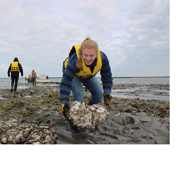 A girl places a bag of oyster shells on a reef.