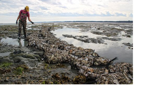 A woman counts bags of shell placed at an oyster reef site.