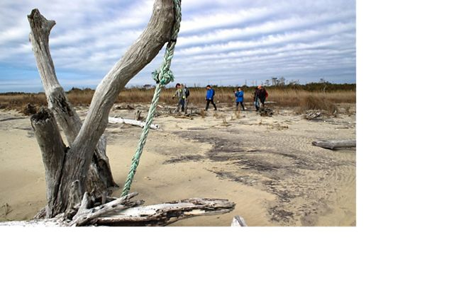 A group of students walk along a beach behind a large sun bleached piece of driftwood.
