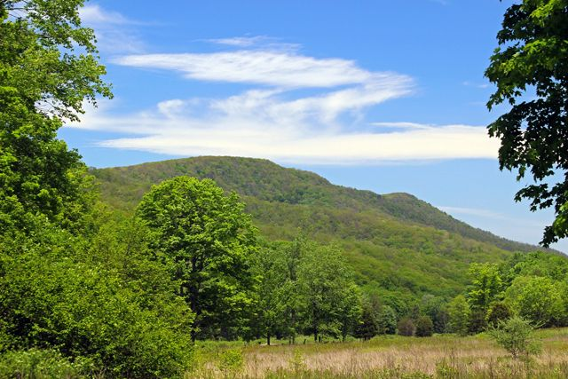 A forested mountain ridge rises in the background framed by tall leafy trees. White clouds streak the bright blue sky.