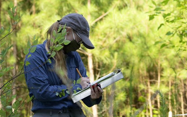 A woman writes notes on a clipboard she is bracing against her arm. She is wearing a ball cap and face mask. A leafy branch in the foreground partly obscures her face.