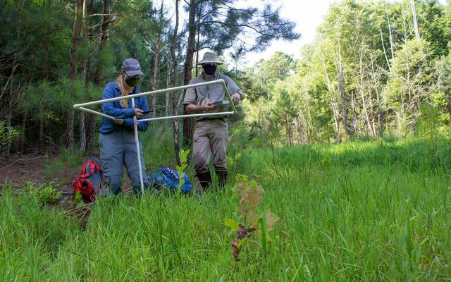 A man and a woman use plastic tubing to map out an inventory plot as a wetlands restoration site. They a standing in tall grass in a spot shaded by trees.