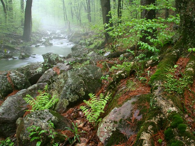 Mist hangs over small stream that flows through green forested landscape with granite boulders along shoreline